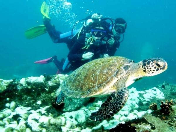 Mergulho com Cilindro em Paraty