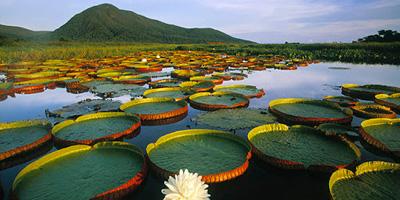 Foto do Pantanal